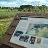 Visit to the Battle of Towton battlefield
